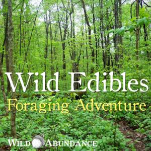 Wild edibles foraging adventure class button
