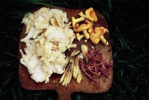 Wild Mushrooms collected in North Carolina